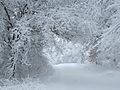 Winter Wonderland at Treampealeau National Wildlife Refuge (31644649105).jpg