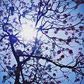 Wonderful sky.jpg