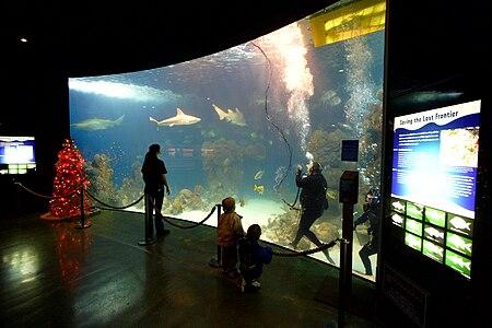 Wonders of Wildlife Museum & Aquarium salt water aquarium with diver