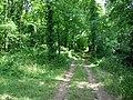 Woodland track - geograph.org.uk - 206345.jpg