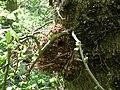 Wren Nest 03-05-10 (4576254490).jpg