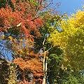 Yamanouchi, Kamakura, Kanagawa Prefecture 247-0062, Japan - panoramio (5).jpg