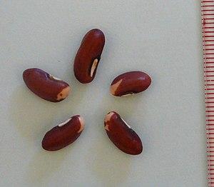 Asparagus bean - Seeds of yardlong beans