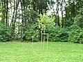 Zapisać w pamięci pokoleń 2012 20 dębów na 20-lecie; 12-Park Pole Mokotowskie 2.jpg