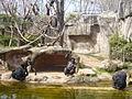 Zoo de Barcelona - micos 2.JPG