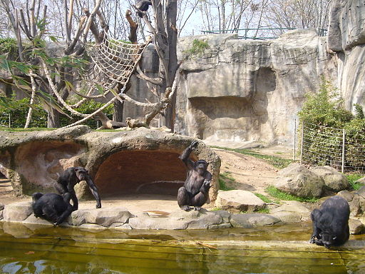 Zoo de Barcelona - micos 2