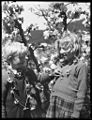(Children wearing daisy chains in front of apple blossom, Warners orchard, Tasmania) (Frank Hurley) (9714613416).jpg
