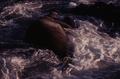 (Jubany) Elefante Marino (8).png