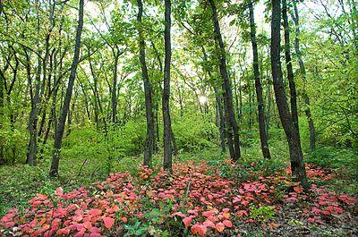 Агармишський ліс 2.JPG