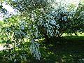 Ботанічний сад ім. М.Гришка IMG 9081.jpg