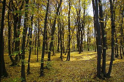 Голосіївський парк, жовтень.JPG