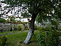 Градината в църква Св. св. Теодор Тирон и Теодор Стратилат.jpg