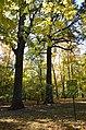 Група багатовікових дубів (Чернігів, Центральний парк культури і відпочинку) 01.jpg