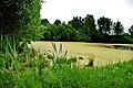 Дроздово, урочище, пруд у церкви - panoramio.jpg