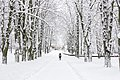 Зима у Рівному.jpg