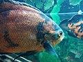 Зоологічний парк Миколахв - риби.jpg