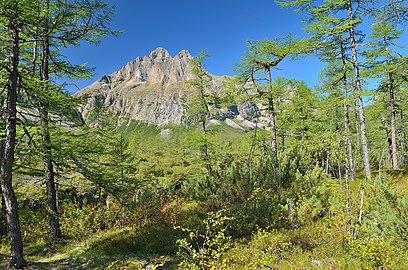 Кодарская тайга в долине Среднего Сакукана.jpg