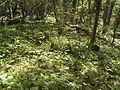 Крым - Мангуп-Кале 25.jpg