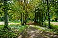 Медумский парк - panoramio (2).jpg