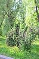 Наводницкий парк в Киеве. Фото 49.jpg