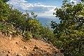 На юго-западном склоне горы Аю-Даг.jpg