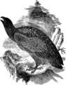 Орел 1 (БЭАН).png