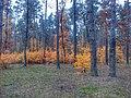 Осінній ліс с., Житомирська область.jpg