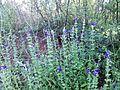 """Парк шума """"Гази Баба"""" 41.jpg"""