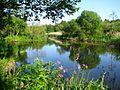Цветущая Плиса - panoramio.jpg