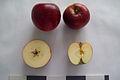 Яблоня сорта Джонаред.jpg