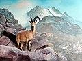 حیوانات تاکسی درمی شده - موزه تاریخ طبیعی شهر قم 21.jpg