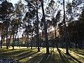 غابة افران تاونات.JPG