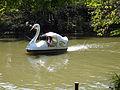 スワンボート(9784716386).jpg