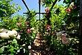 ロイズ ローズガーデン(Royce' Confect Rose Garden) - panoramio (3).jpg