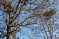 冬季 - panoramio.jpg