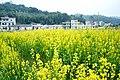 广州最美乡村—红山村 - panoramio (11).jpg