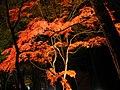 月の石もみじ公園 ライトアップ(撮影日:2008年11月) - panoramio.jpg