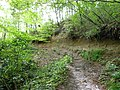 水の森公園 遊歩道 Trail in Mizu-no-mori Park - panoramio.jpg