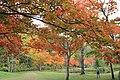 秋色の散歩 - panoramio.jpg