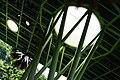 綠天棚 Green Canopy - panoramio.jpg