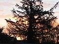 -2019-02-24 Yellow sunrise, Trimingham (2).JPG