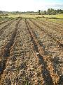 0096jfLandscapes Sunsets Fields Maronquillo San Rafael Bulacanfvf 22.JPG