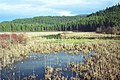 02-06-18, swamp - panoramio.jpg
