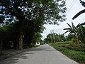 0248jfVentinilla Cabayaoasan Nancamarinan Fields Roads Paniqui Tarlacfvf 13.JPG