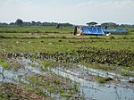 03306jfBirds Sanctuary Ducks Wetland Marshes Rice Fields Candaba Pampangafvf 16.JPG