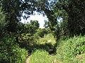 07-05-2017 Countryside lane near Branqueira (1).JPG