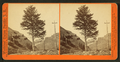 1,000-mile Tree, Weber Canyon, Utah, by Watkins, Carleton E., 1829-1916.png