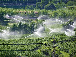 Sprinklers in vineyard in the region of Trentino-Alto Adige (Italy)
