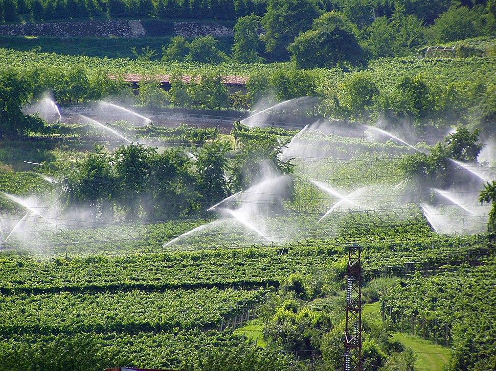 10 Sprinklers in vineyard - Trentino-Alto Adige, Italy