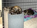 2006-04-15 Sleeping cats (8653594096).jpg